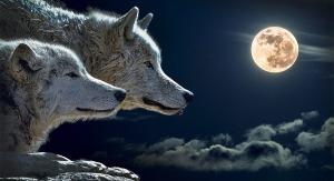 lobos-diferencias-perros